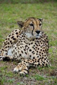 Safari Foto's
